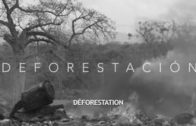 STF  – Deforestation